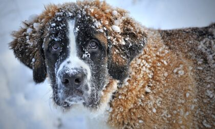 Come preparare i cani all'inverno